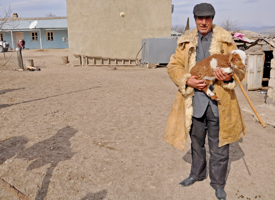 A man owning about 60 sheep (Mari Nikuradze)