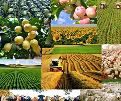 georgian_agricultural_produce_Cropped