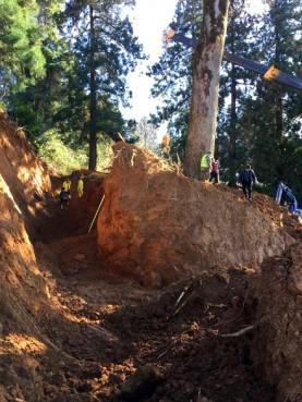 tree__roots_Guerilla_Gardening
